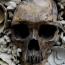Sacred- Human Skull / Animal Bones and Sponges in Reliquary Box